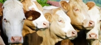 02/12/2016: New ISO specification for better management of animal welfare worldwide